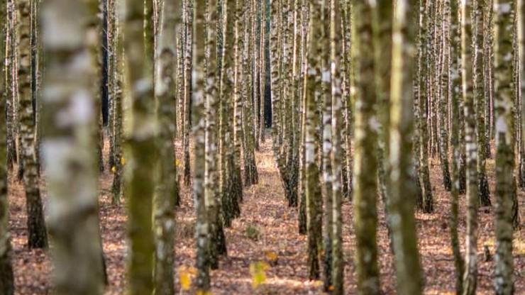 Seniorka zgubiła się w lesie. Przeżyła dwa dni bez jedzenia i picia
