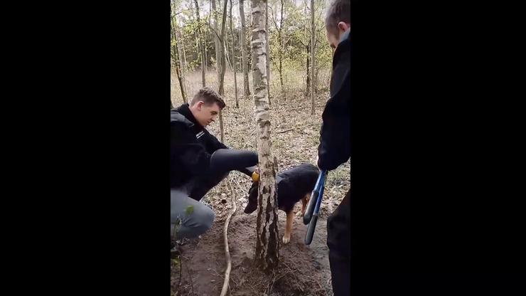 Suczkę przywiązaną drutem do drzewa znalazł rozbrajający wnyki. Interwencja fundacji