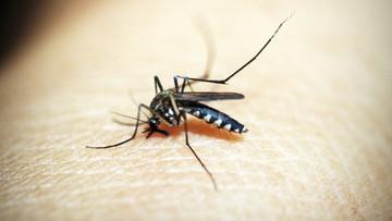 Plaga komarów na Słowacji. Pomóc mają drony