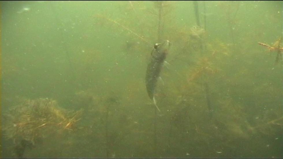 Taaaka ryba - Odcinek 43